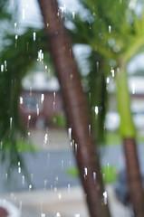 Palm Trees in the Rain (erluko) Tags: smcpentaxf11750mm motion rj45pttlextension weeklythemechallenge rain palm trees water drops drips k50 50mm lighting remoteflash