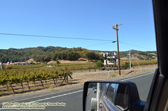 092613-024 (leafworks) Tags: roadtrips greatpacificnorthwestmove travels california pacificcoasthighway highway101 vineyards wine hopland winecountry columbia sc usa