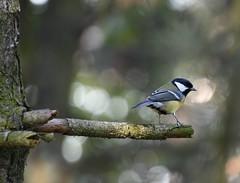 Explorer (petrk747) Tags: kladno czechrepublic forest nature fauna bird animal tree trees light shadows landscape rays nikon nikond500 explorer