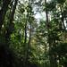 Gede-Pangrango National Park