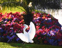 bb_150307_'15 RV Trip up Coast_069 (lane.bailey1) Tags: 15trip 2015roadtrip ca15 palmsprings15 rv