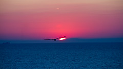 Sunset on the Adriatic (Rae-J09) Tags: sunset sea ocean piran slovenia coast blue pink bird sun colour color canon 7d 55250mm outdoor adriatic adriaticsea water horizon seascape summer silhouette
