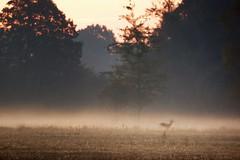 Ghost at dawn (pszcz9) Tags: polska poland dolinabaryczy baryczvalley pejzaż landscape przyroda nature natura mgła fog mist beautifulearth sony a77 jesień autumn fall świt dawn