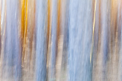 Golden Tears of a Forest in Flames (DavidFrutos) Tags: davidfrutos segovia canondslr 5dmarkii canon70200mm nature naturaleza landscape atmosphere ambiance fineart paisaje blur icm colourful color colour colors colours tree trees tears field gold golden forest bosque poles pole flames wood
