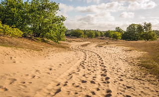 Meandering sand path through  a Dutch national park with shifting-sand
