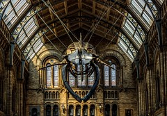 (lauraknowles4) Tags: carcass bones hall bluewhale museum naturalhistorymuseum canon london