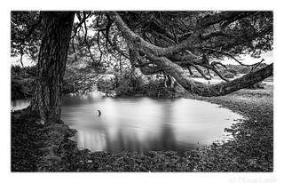 Whitemoor Pond