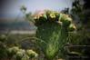 Du piquant ... ( P-A) Tags: plante tropical verdure épines roncesvacances touristes visiteurs provence france été amies photos simpa© photoquébec