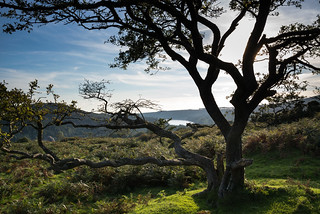 Looking through a tree to Burrator - NK2_2555