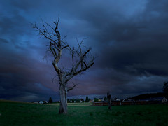 DeadTree (Remy Miedzinski) Tags: tree deadtree strorm green blue dark switzerland countryside nothdr longexposure clouds nuages suisse dead wood