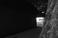 DSC_0135 (medeirosisabel16) Tags: path caminho street tronco tree árvore trunk school escola etec guaratingueta peb bw preto branco black white luz light