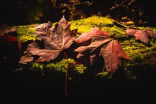 It's Autumn [Explored]