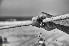DSC_4511 s (ahcravo gorim) Tags: xávega torreira portugal mãos mar ahcravo gorim mãe filho