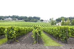 _MG_7728 (www.studiopessinger.fr) Tags: vigne domaine cepage france vin gironde vert raisin