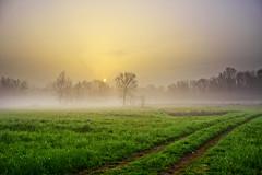 Prima luce (Marco Allegro) Tags: alba natura nebbia lombardia alberi