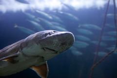 IMG_7407 (Malu Green!) Tags: sanfrancisco california califórnia eua usa aquarium aquário aquariumofthebay sanfranciscoaquarium fish color colores cores peixe aguaviva estreladomar seastar tubarão shark jellyfish jellies