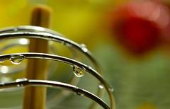 Macro Monday~ Staying Healthy (Karen McQuilkin) Tags: macromondays lemon water healthier health stayinghealthy nosoda