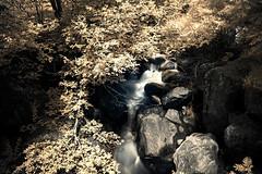 Infrarosso color (Vanda Guazzora) Tags: colore corretta infrarosso acqua cespuglio pietre