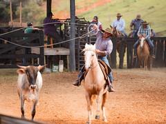 Laço (Ars Clicandi) Tags: paraná brasil br brazil parana jaboti prova do laço comprido peao peão boiadero boiadeiro laco cowboy