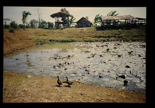 Farm Pond = ため池