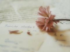 Memories (jocsdellum) Tags: memories records recuerdos nostalgia flor flower rosa pink lletres cartes letters petals pétalos desenfoque softfocus
