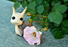Luke (air_dan) Tags: mushroom peddlers bjd pet snail