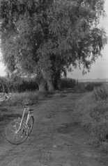 The day with a bike (Other dreams) Tags: michale pomerania poland pomorze polska fields cabbage tree bike bw film analog normallens 50mm corn willow mud puddle