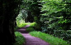 _the way home (SpitMcGee) Tags: weg way grün green eveningwalk abendspaziergang spitmcgee explore 70