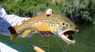 Montana Bighorn River Fishing Lodge 27