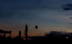 Must try harder! to get it right. (alan.irons) Tags: bird heron silhouette flight dawn bluehour arbroath angus harbour morning eos5dmkiv ef2470f28llusm gotitwrong pan scotland eastcoast longlegs ardeidae pelecaniformes