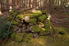 Abandoned farms I (Metalhund) Tags: sweden skåne abandoned forladt skov natur mos moss yashica35mmf28 manual manuallenses manualfokus a7