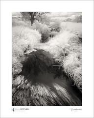 River Rother (tobchasinglight) Tags: eastsussex flowers garden infrared robertsbridge selhurst selhursthalt river rother fujixe1
