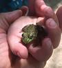 First Frog (Bill Bresler) Tags: bluelakeresort cinderblock knottypine rustic toddler nature