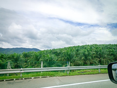 Palm oil plantation by the highway (Stratman² - (Joey and I are both ill )) Tags: canonphotography powershotg1x roadtrip northsouthexpressway plushighway peninsularmalaysia perak palmoil nature