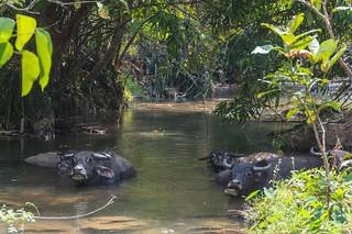 trekking chiang mai - thailande 45
