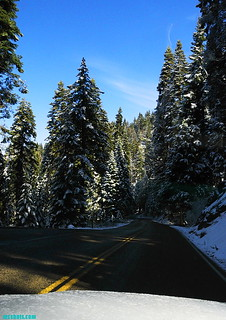 Sequoia117