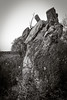 Tree stump (FSR Photography) Tags: fsrphotography de deutschland monochrom himmel vignette kontrast licht sw light bw scenery travel baumast äste blackandwhite einfarbig reise branch lichter blackwhite nordrheinwestfalen schatten schwarzweiss shadows schärfe ast schärfentiefe pflanzen pflanze fsr flickr whiteblack lights travelling summer contrast moor monochrome canon400d canon schwarz black sky reisefotographie outdoor 400d lightroom white