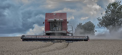 Before the storm breaks (David Feuerhelm) Tags: outdoors nikkor field wheat farming farmer agriculture rural harvest harvesting combine combining massey masseyferguson harvester red dust clouds weather conntryside driver nikon d750 hundon suffolk england