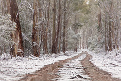 Snowy Road || CENTRAL TABLELANDS || NSW (rhyspope) Tags: australia aussie nsw new south wales canon 5d mkii oberon blue mountains jenolan rhys pope rhyspope snow ice road street avenue winter snowfall cold white wonderland gum tree forest woods central tablelands