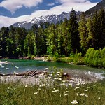 A River Flows Through a Forest and Mountains...and by Some Daisies (Lake Chelan National Recreation Area) thumbnail