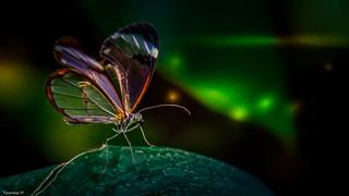 Butterfly - 3674
