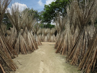 A village path through jute sticks in Bangladesh