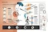 Como é feita uma biópsia? (Revista SAÚDE) (Filipe Campoi) Tags: biopsia revista editora abril infografia infographic infografico saude ilustrações ilustracao