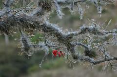 Um galho coberto por tillandsias! (Márcia Valle) Tags: bromeliads mulungu erythrina tree árvore brasil brazil winter weather tillandsias márciavalle flores floresvermelhas flowers