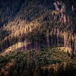 Southern Carpathians, Piatra Craiului - Romania - Landscape photography thumbnail