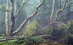 Bickerton Woods (colinbell.photography) Tags: