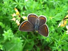 Butterfly 1430 (+780000 views!) Tags: butterfly borboleta farfalla mariposa papillon schmetterling فراشة