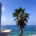 Palm Tree at Laguna Beach, California