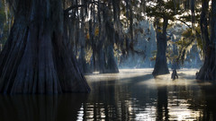 Morning Silence (D Breezy - davidthompsonphotography.com) Tags: swaps south fall autumn cypress fog mist mood kayak boat quiet peaceful travel nikon d800e alligators lake