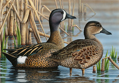 2017FDC135 (USFWS Headquarters) Tags: duck stamp federalduckstampcontest conservation art wildlife